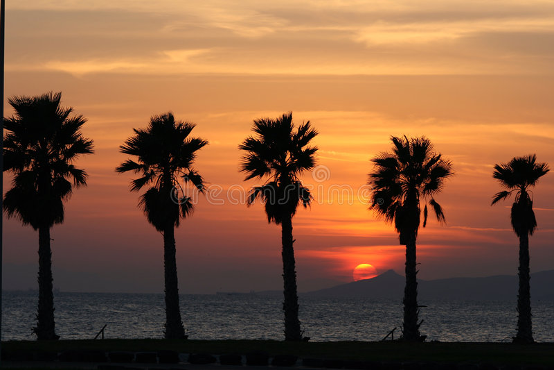 Sun set and palms stock photography