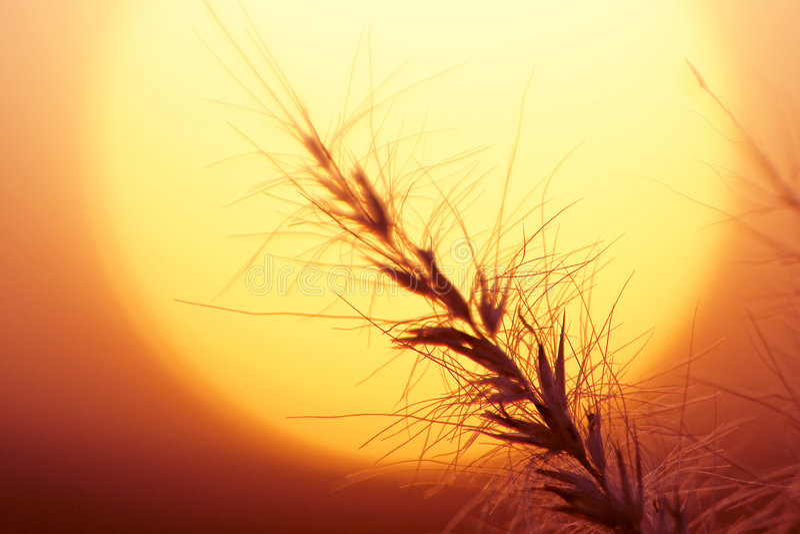 Sun-Set und Gras stockfotos