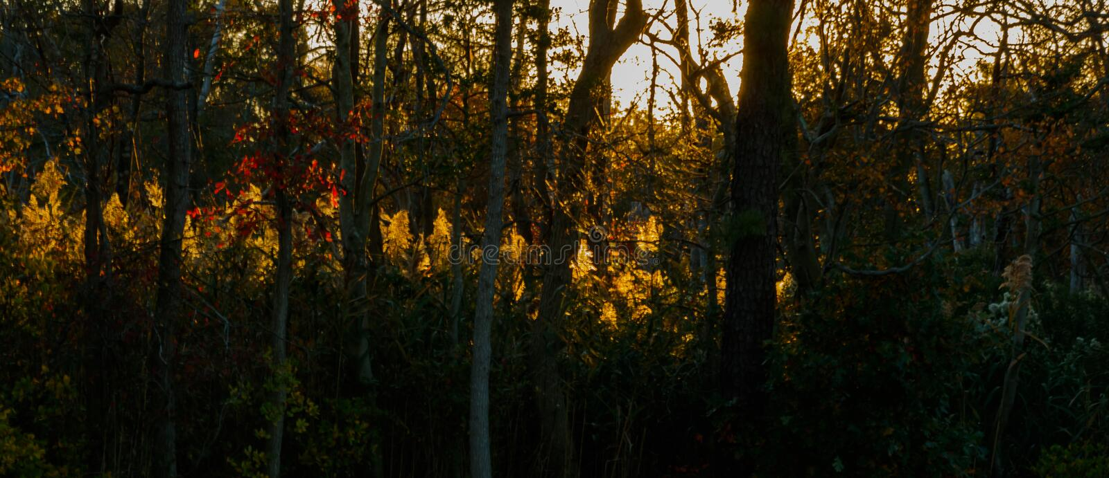 The Sun Sets At A Slant through the forest. The colorful Autumn forest is brought to life as the sun sets and casts a long line of sun along the trees royalty free stock photo