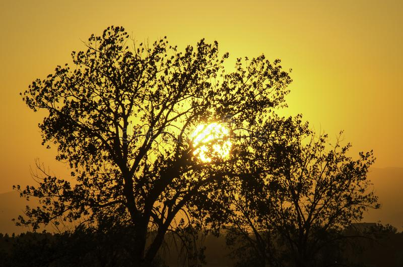Sun Setting em A clear Colorado Sky Silhouettes Trees foto de stock