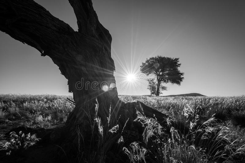 The sun setting between two trees stock photography