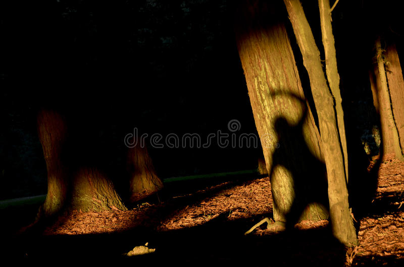 Sun Shadow Tree stock images