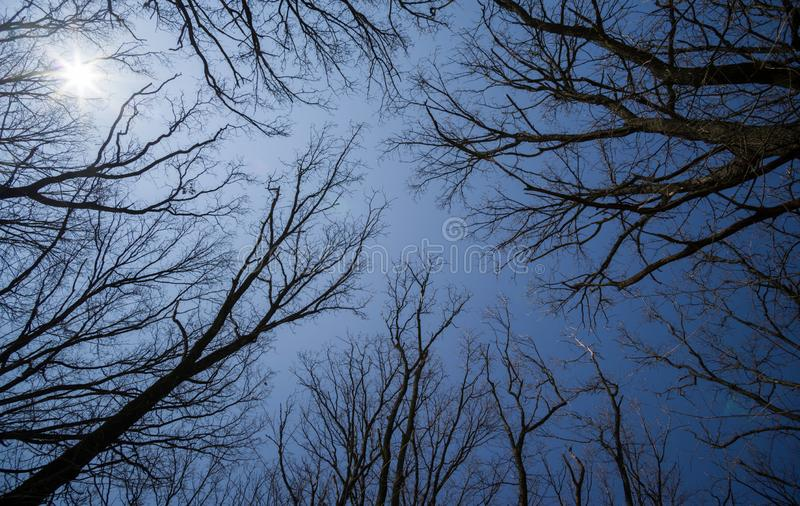 The sun shines through the bare branches of the trees against the blue sky.  royalty free stock images