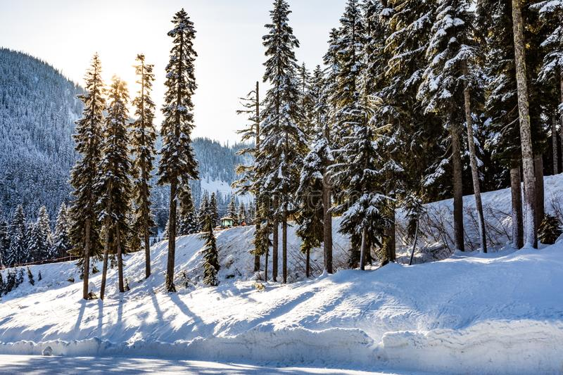Sun shines from behind tall trees with a mountain in the distance next to a hard snow packed road. At Stevens Pass royalty free stock image