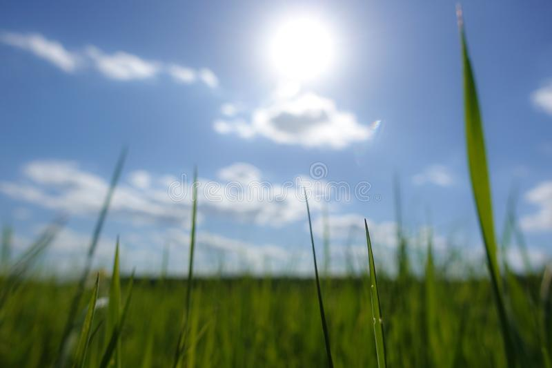 The sun shines over a grassy field and clouds int he sky.  royalty free stock image
