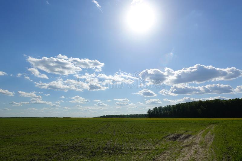 The sun shines over a grassy field and clouds int he sky.  stock photos