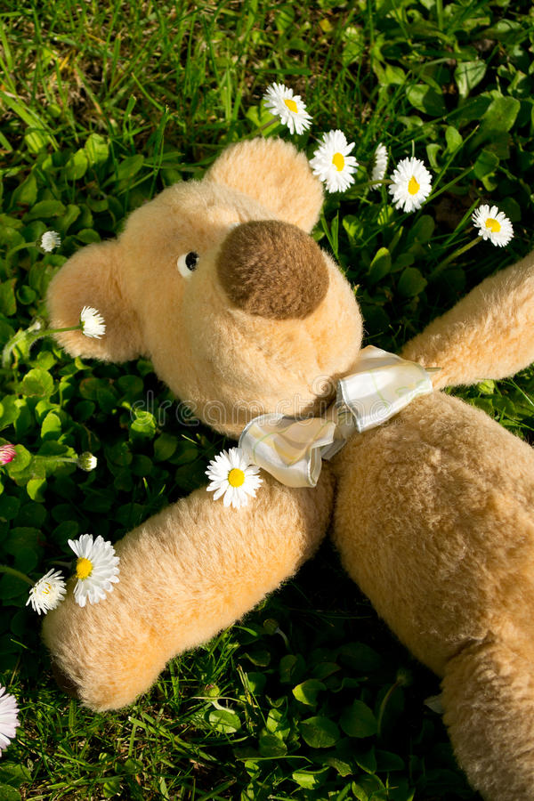 Download The sun shines on Teddy... stock photo. Image of cheerful - 24995612