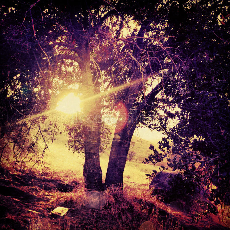 Sun shines through tree in a Surreal grungy tree haunting fantasy with saturated colors on mount rubidoux riverside california. Surreal grungy tree haunting stock image