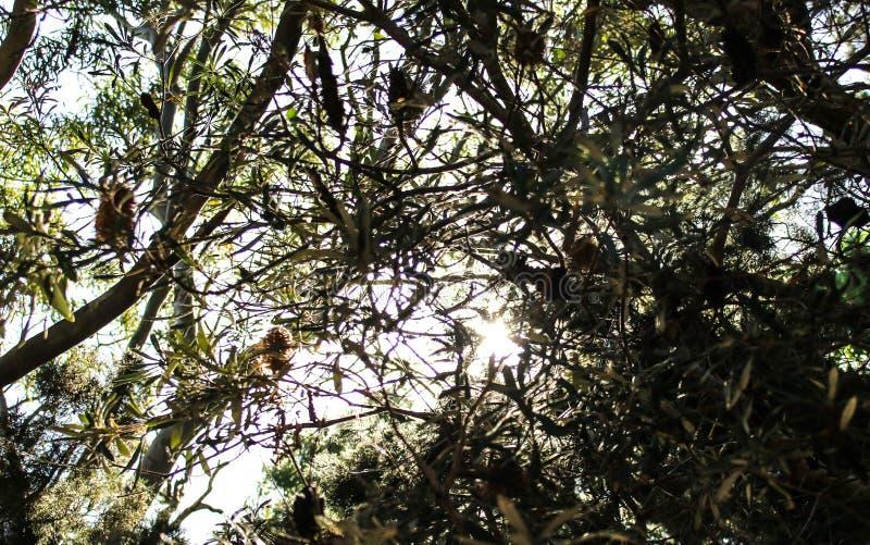 Sun shinging a través de los árboles fotografía de archivo libre de regalías