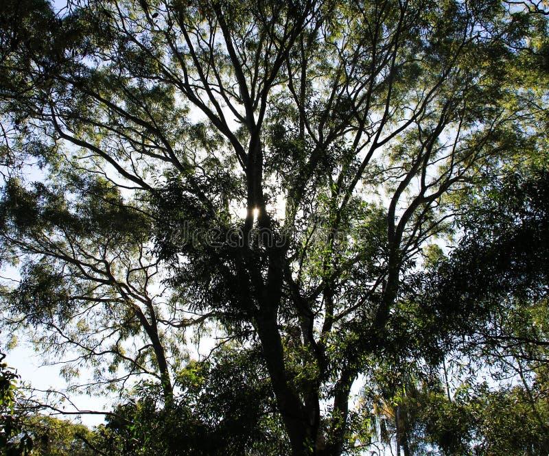 Sun shinging a través de los árboles imagen de archivo