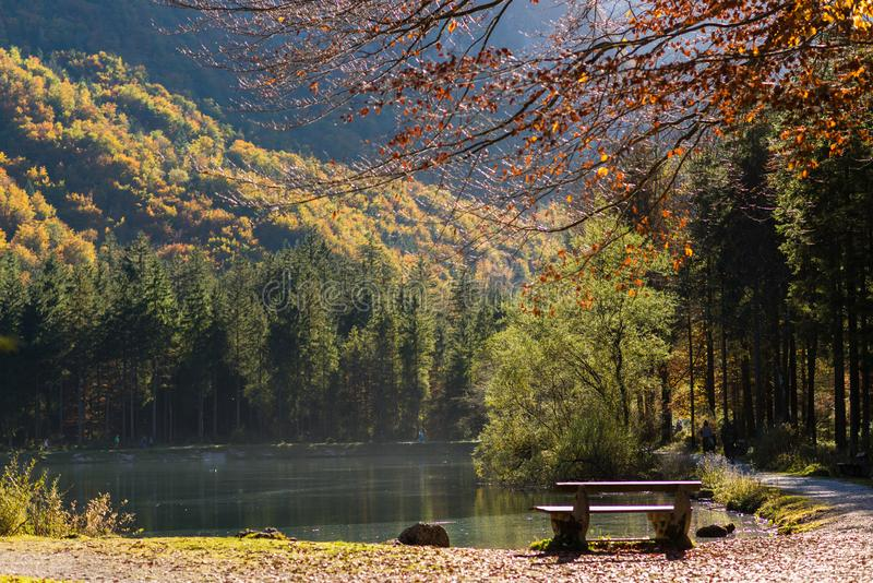 Sun shining through autumn forrest with a lake royalty free stock photography