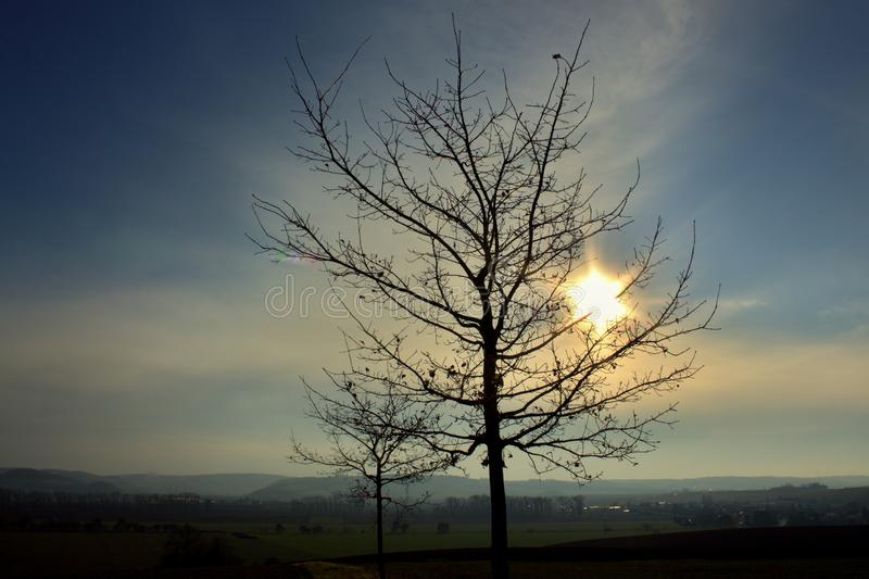 Bare tree in the middle of a field on a hill. royalty free stock images