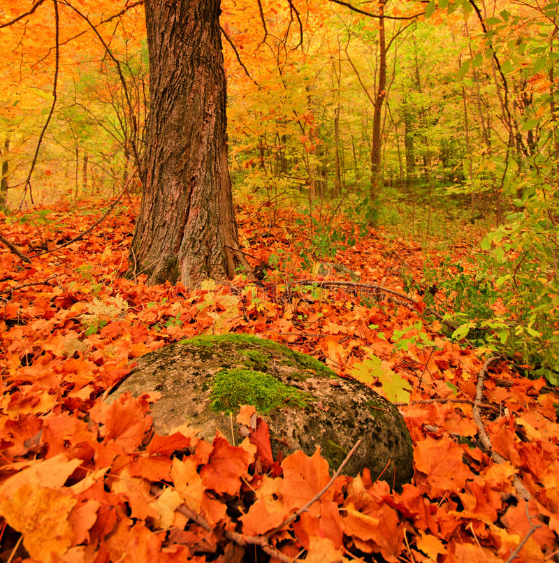 Fall colours royalty free stock images