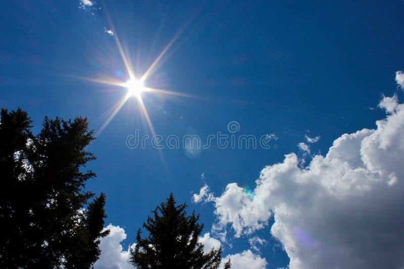 Sun shining down on pine trees royalty free stock photos