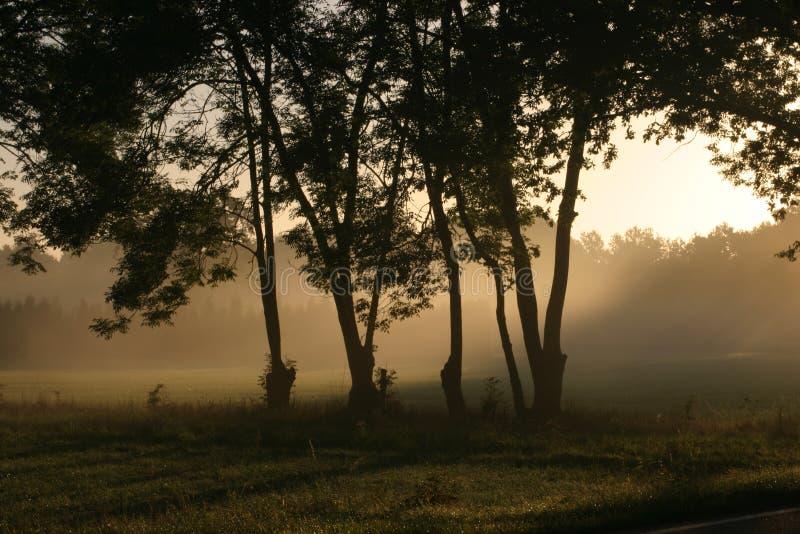 Sun shining over a foggy meadow. Sun shining through trees over a foggy meadow royalty free stock photography