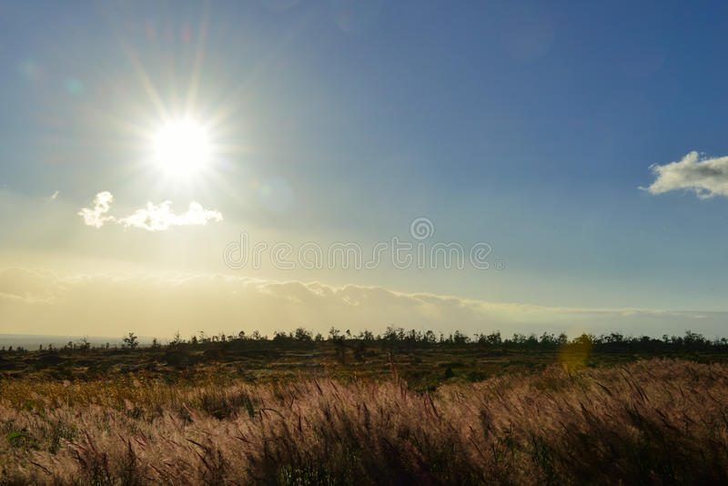 tall grass field sunset. Download Sun Shining Over The Tall Grass Field In Volcano National Park At Sunset, Big Sunset