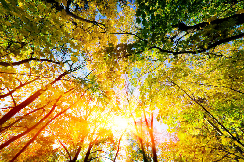 Sun shining through summer, autumn trees and colorful leaves. royalty free stock photos