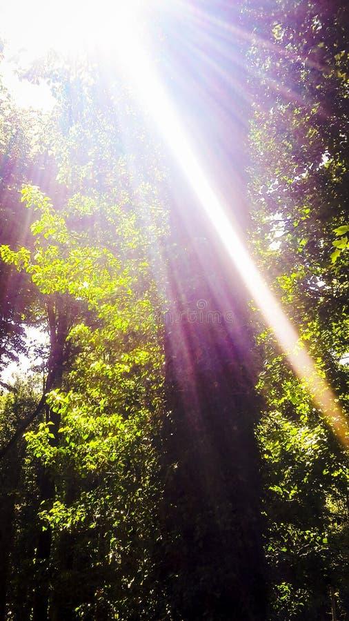 Sun shining royalty free stock images