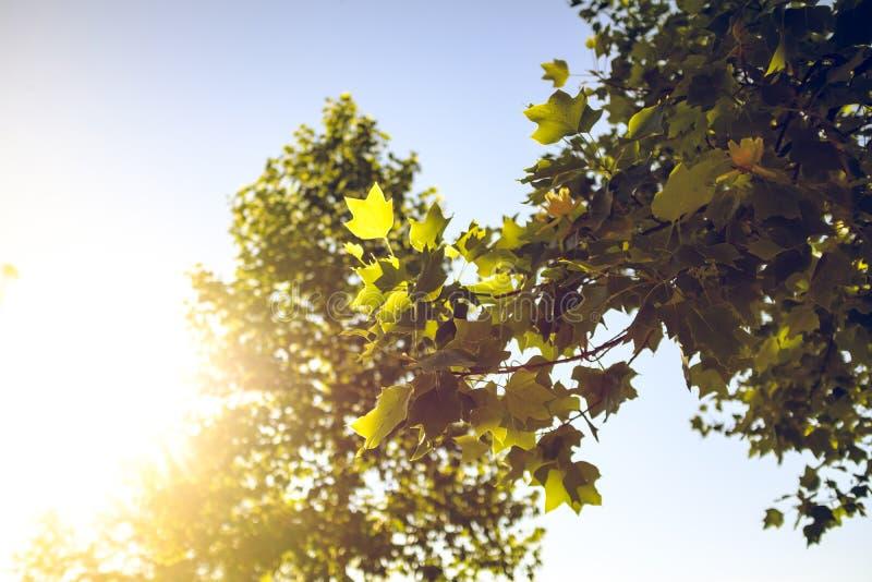 Sun shining thru green leaves tree branch on a summertime landscape scene. Sun shining thru green leaves tree branch on a summertime landscape stock image