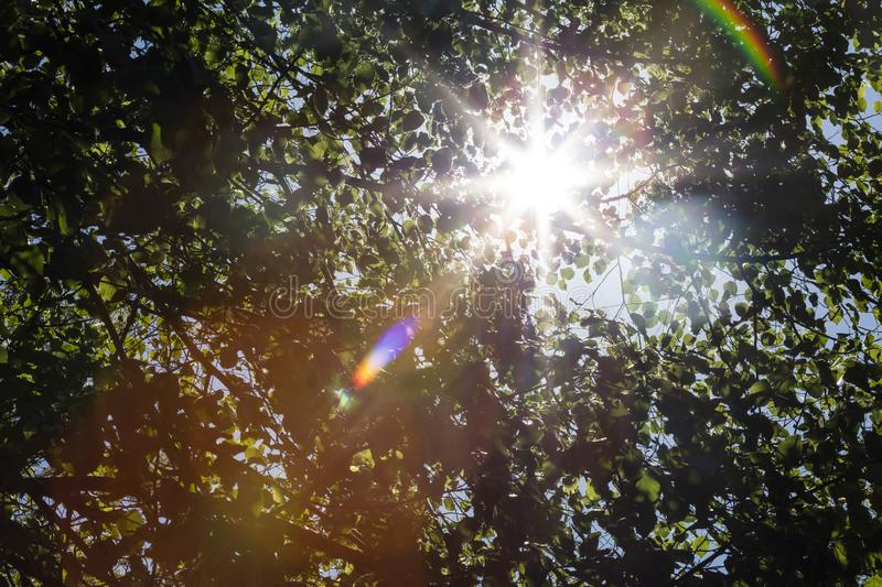 Sun shining through a tree canopy creating a decorative rainbow like lens flare on an HDR photo.  stock photography