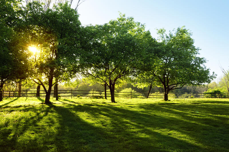 Sun Shining through Trees royalty free stock photography