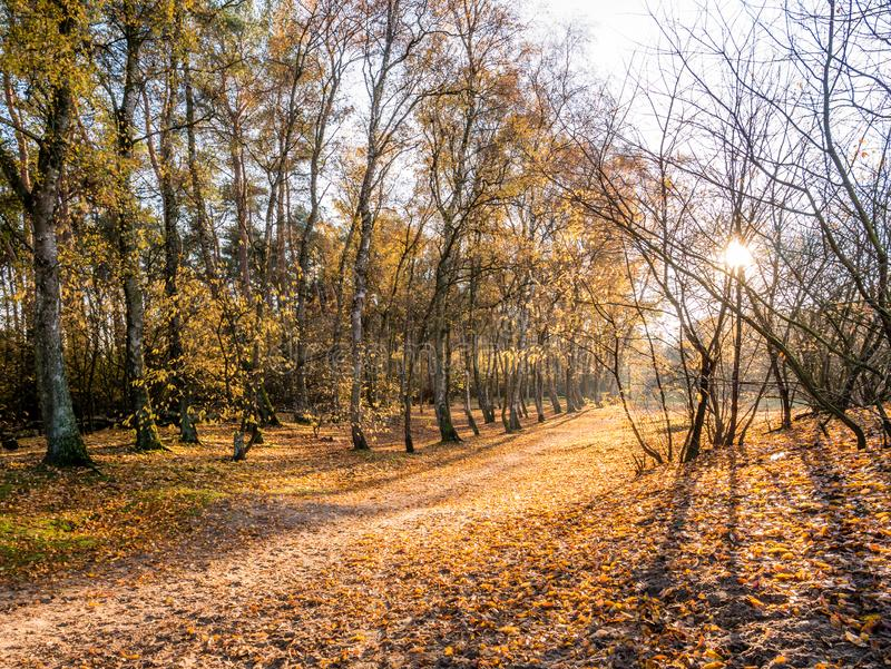 Sun shining through trees on path with fallen leaves in late autumn, nature reserve in Hilversum, Netherlands. Sun shining through trees on footpath with fallen royalty free stock image