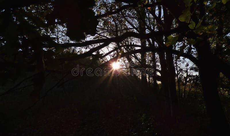 Sun through tress, dark foreground with bright sunshine, photo taken in the UK. Sun shining through tress, dark foreground with bright sunshine, photo taken in royalty free stock photos