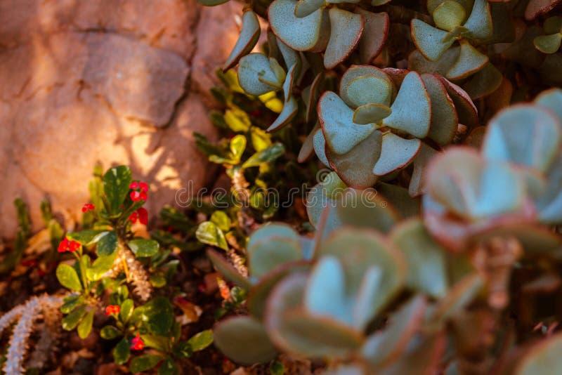 Sun shinning adentro en succulents en un invernadero fotos de archivo