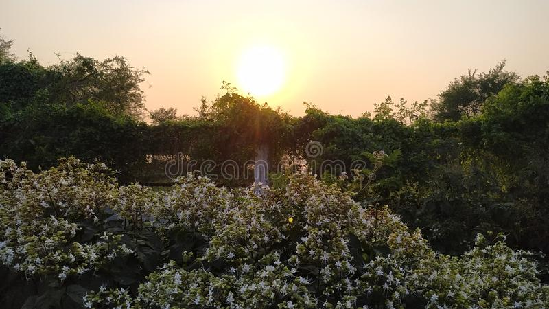 Sun sneaking behind the bushes royalty free stock image