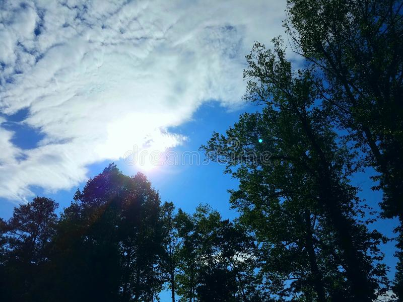 Sun sobre árvores foto de stock royalty free