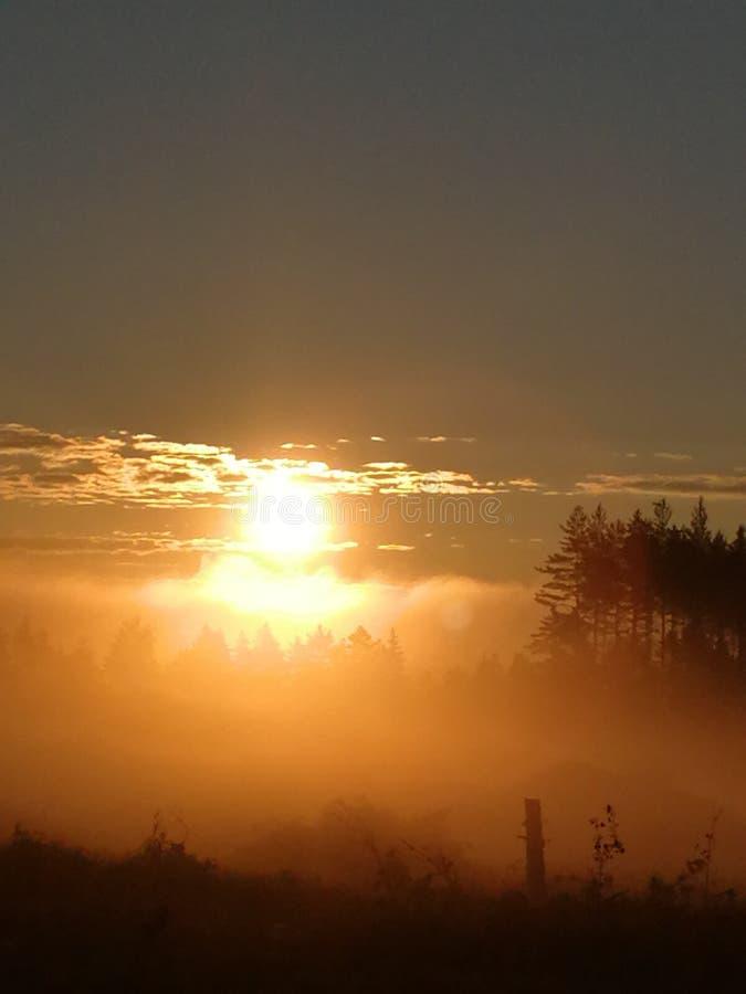 Sun sobre a floresta fotografia de stock royalty free