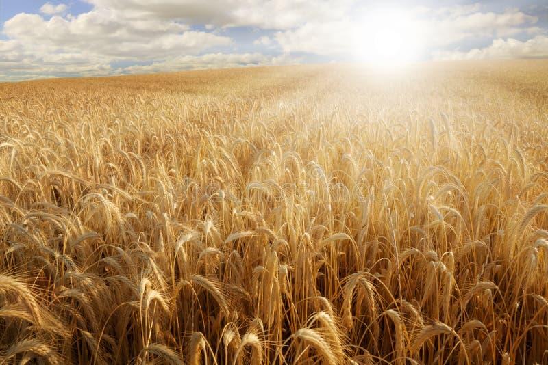 Sun sobre um campo de trigo foto de stock