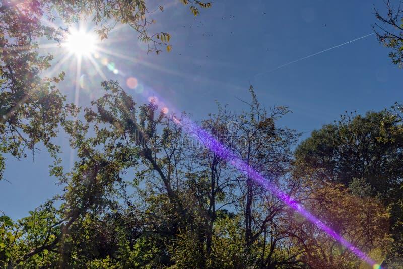 Sun sobre un árbol en la madera imagen de archivo