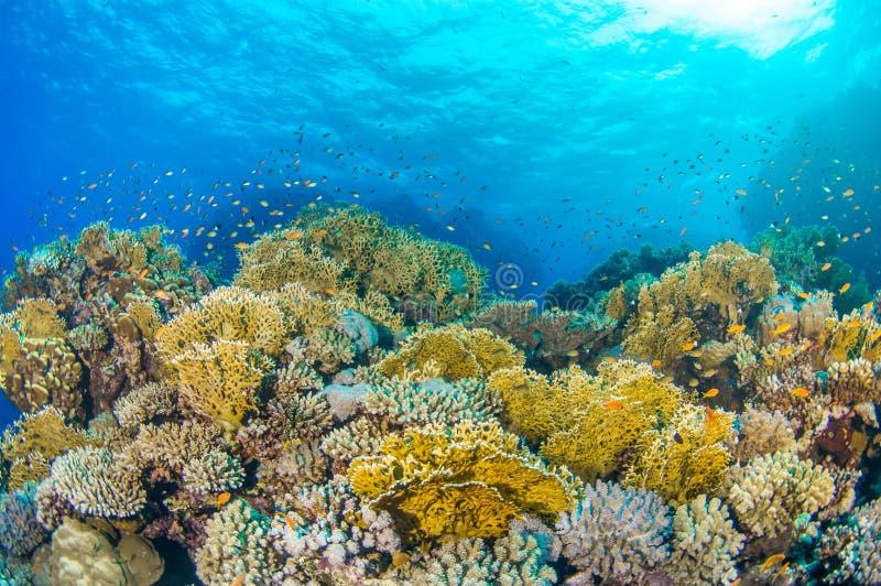 Sun sopra la barriera corallina egiziana fotografie stock
