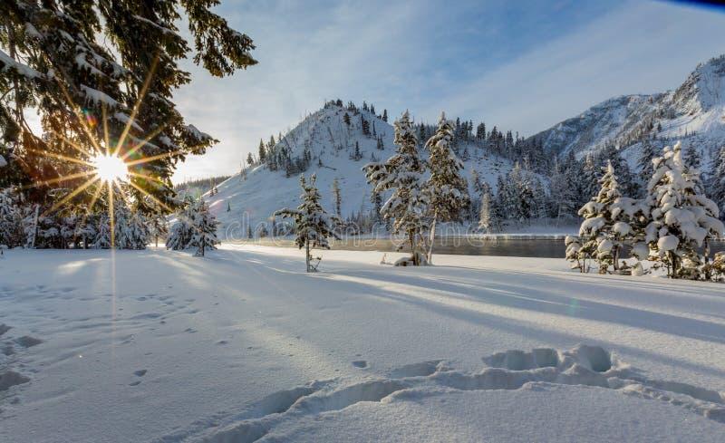 Sun sparkles através dos pinheiros em Yellowstone fotos de stock royalty free
