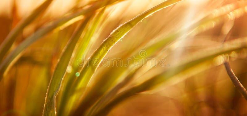 Fondo astratto dell'erba fotografia stock