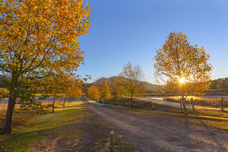 Sun starburst through autumn colored trees. South Africa stock images