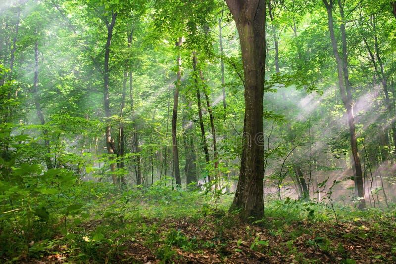 Sun strålar till och med treesna arkivfoton