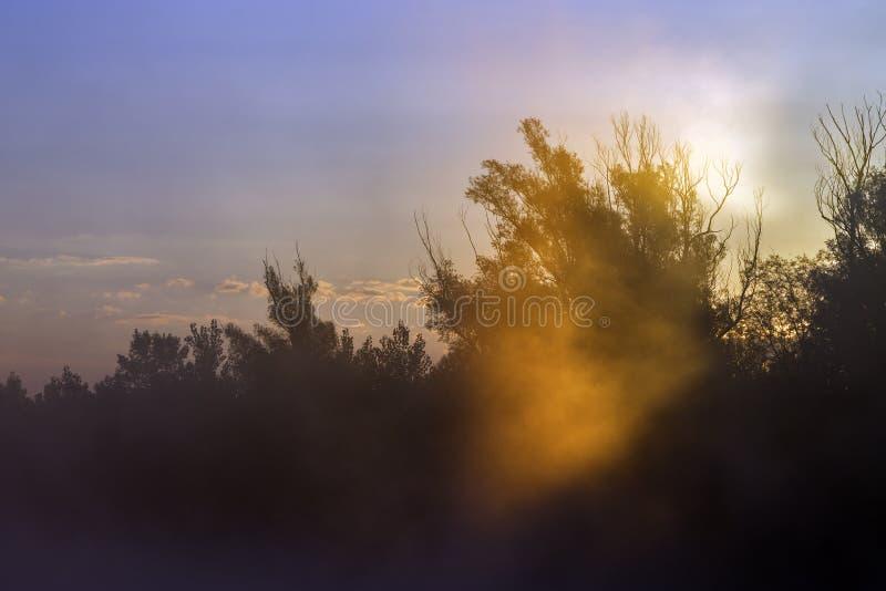 Sun-Strahl durch Niederlassungen auf nebelhaftem Morgen stockfotos