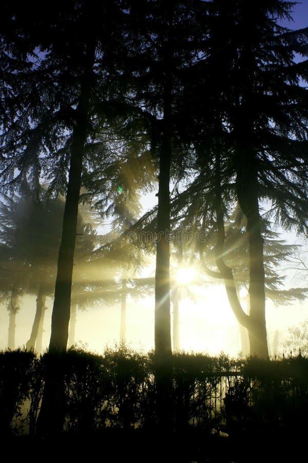 Sun-Strahl an einem nebeligen Tag lizenzfreie stockfotos