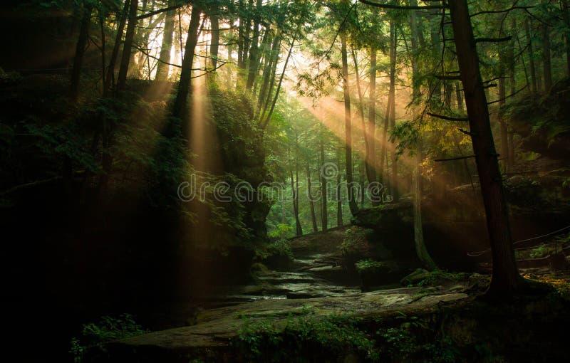 Sun-Strahlen, die durch den Wald emporragen lizenzfreies stockfoto