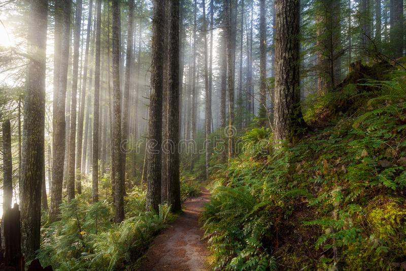 Sun-Strahlen entlang Wanderweg in Washington State Park lizenzfreie stockfotografie