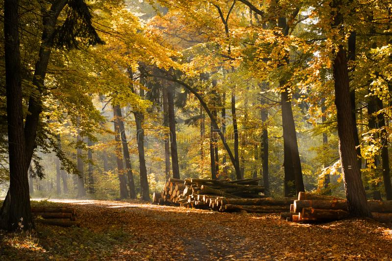 Sun strahlt das Kommen durch Bäume auf eine Straße lizenzfreie stockfotos