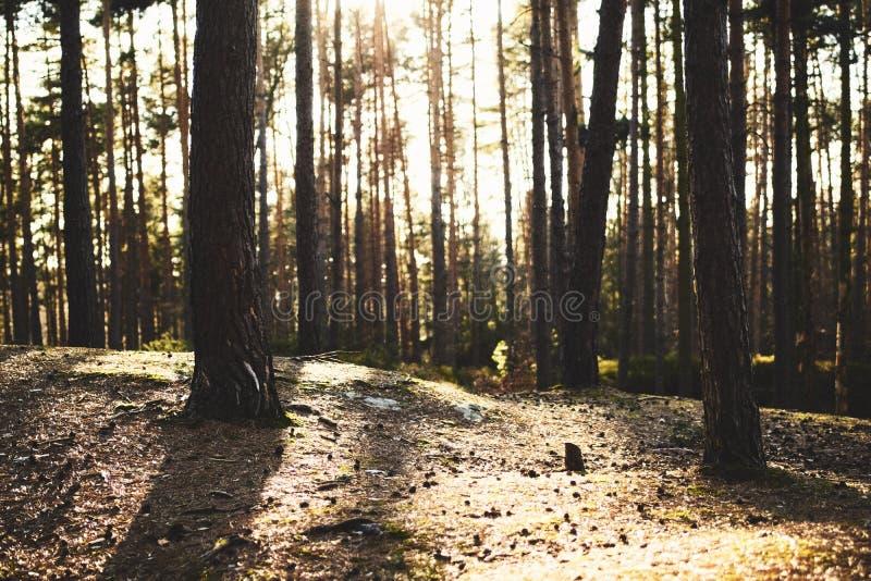 Sun strahlt das Kommen durch Bäume in einem Wald stockbild