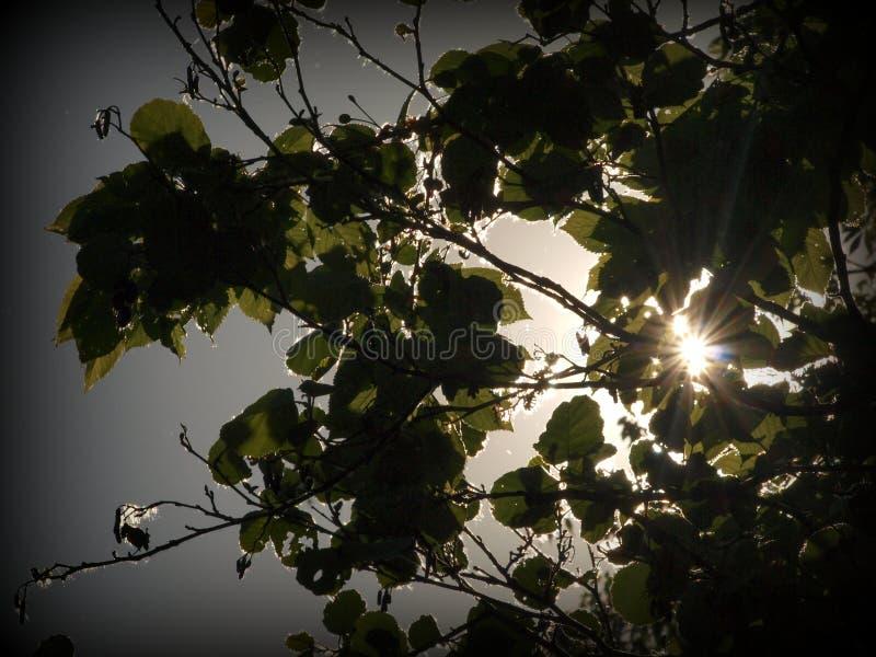 The Sun-stralen in het bos stock afbeeldingen