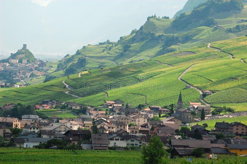 Sun sulle vigne: La Svizzera fotografie stock