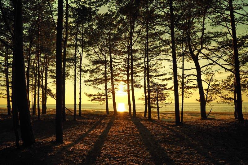 Sun and sunset orange sky over sea coast royalty free stock image