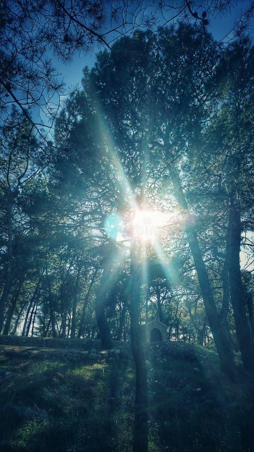 Sun-theough Bäume lizenzfreies stockfoto
