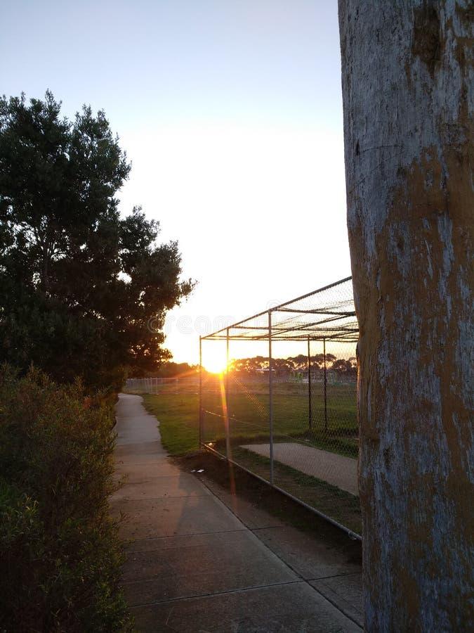 Sun till och med trees arkivfoton