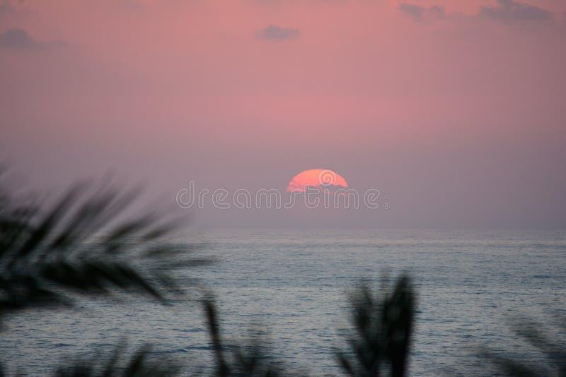 Sun tombe pour l'horizon dans la perspective des branches de palmier photos stock